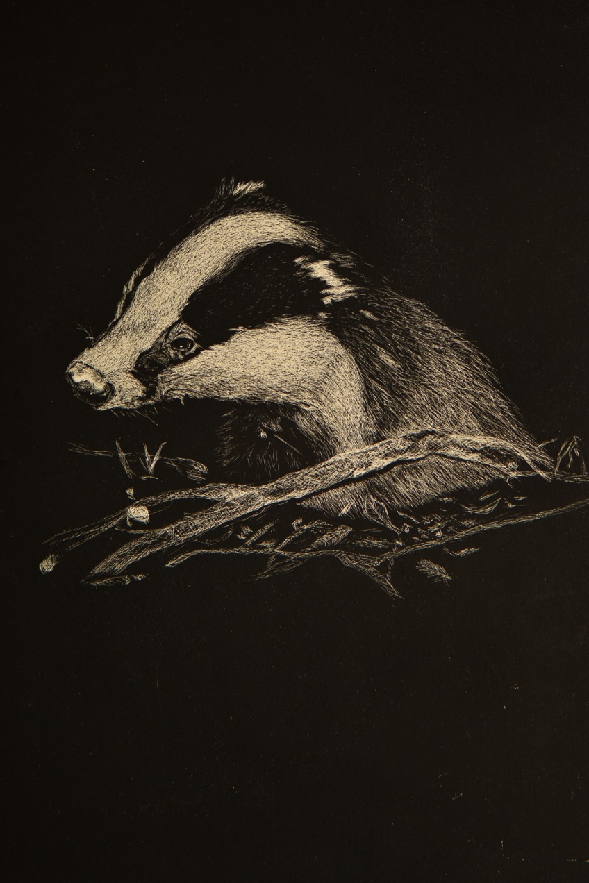 Badger by David Element (@davidelement1)