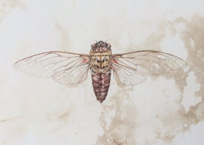 Cicada by Deirdre Bean